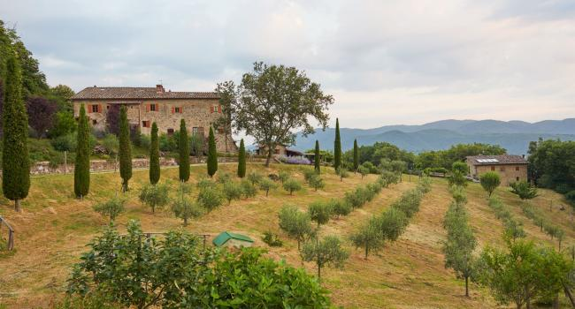 External view: front of the House and olive yard